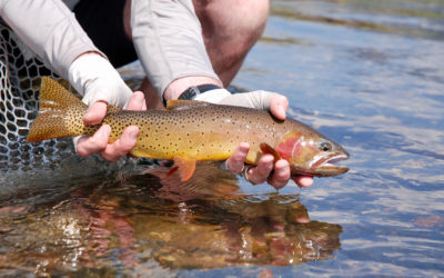 5 Tips for the Best Bozeman Fly Fishing Trips