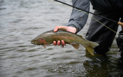 3/30/2020 Bozeman, MT Fly Fishing Report