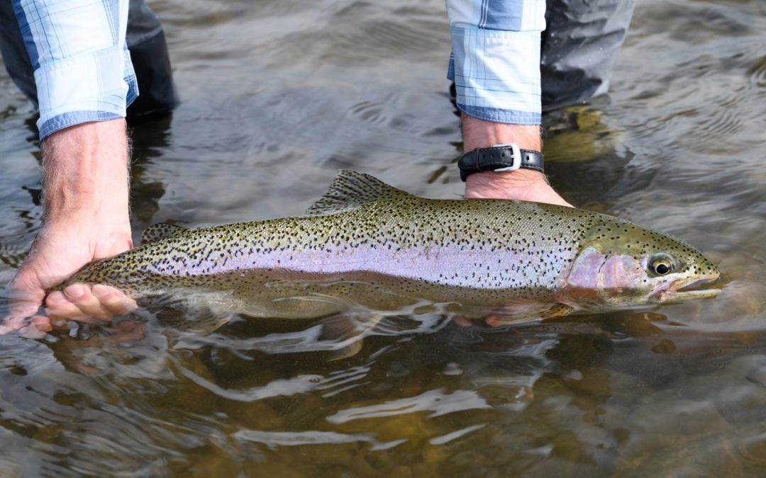 Bozeman, MT Fly Fishing Report 7/4/19