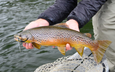 Bozeman, MT Fly Fishing Report 10/7/19