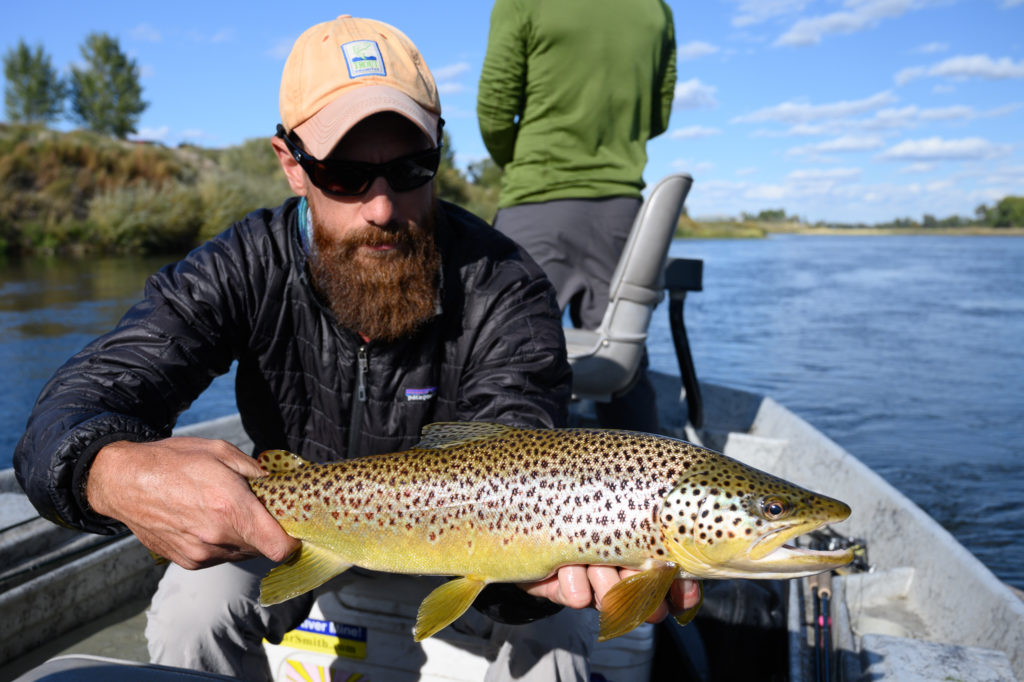 Montana angler holding brown trout on Missouri River