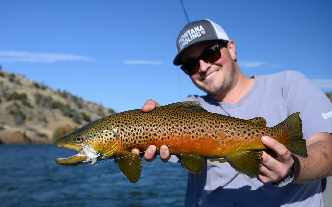 Angler with a brown trout on a fall fly fishing trip in Montana