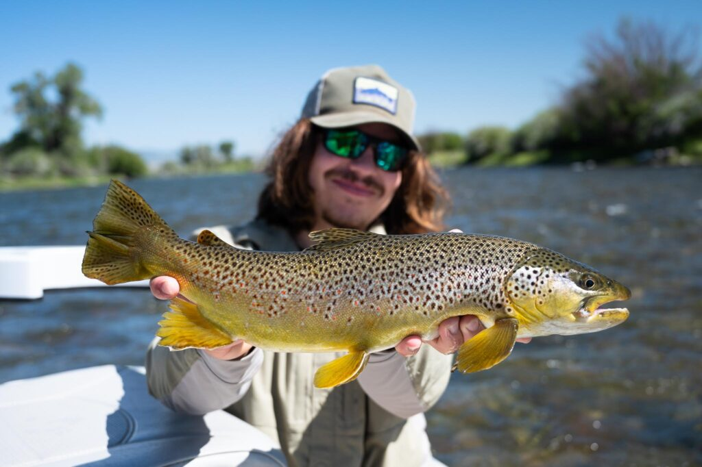 Madison River Brown Trout caught in July