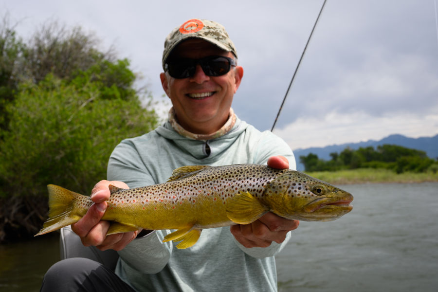 Angler with a Yellowstone River Brown Trout