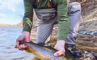 4/19/2021  Bozeman, MT Fly Fishing Report