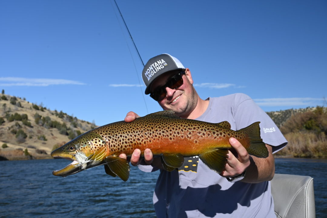Angler holding a Madison River Brown Trout in October