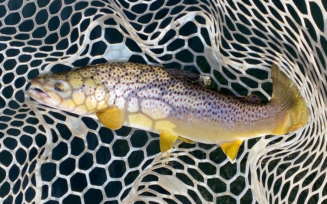Bozeman, MT Fly Fishing Report 10/28/19