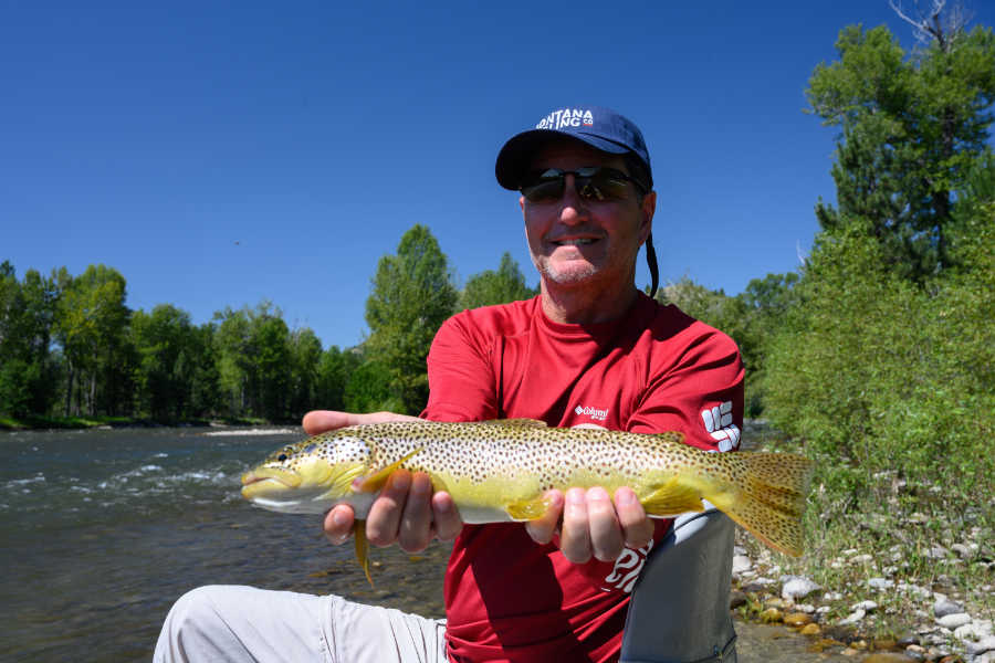Angler with Brown Trout on Stillwater River