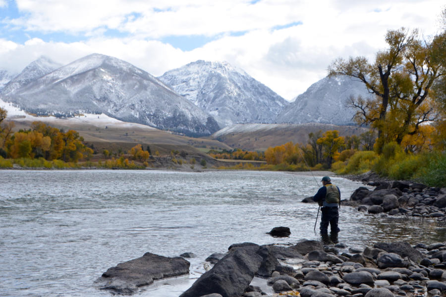 Angler wade fishing on the Yellowstone River