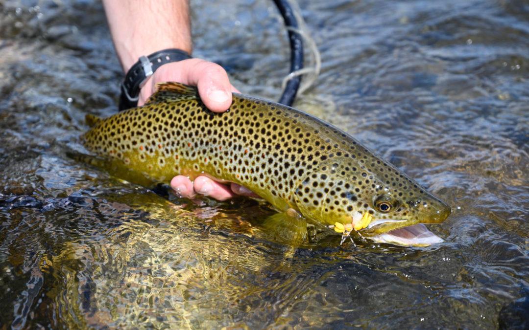 Top 5 Montana Fly Fishing Trips