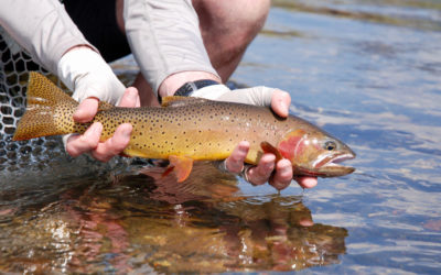 July Fly Fishing in Montana