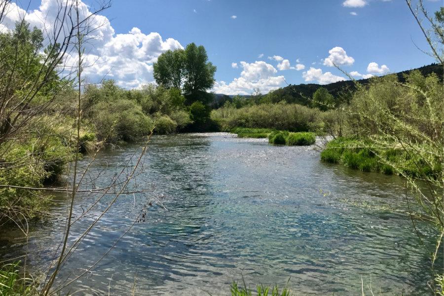 Depuy's Spring Creek in Montana