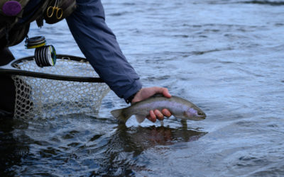 Gallatin River Fly Fishing Guides, Trips, and Outfitting