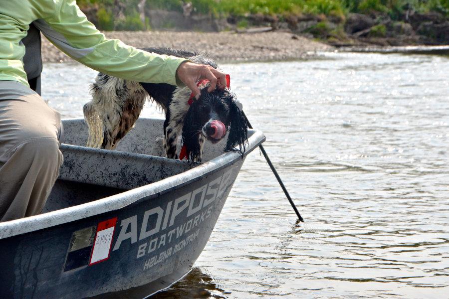 jefferson-river-boat-dog