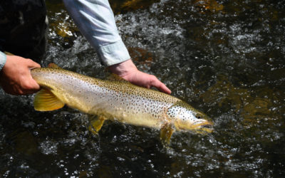 Top 5 Reasons for Fly Fishing with Barbless Hooks