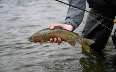 Madison River Spring Fly Fishing Trips
