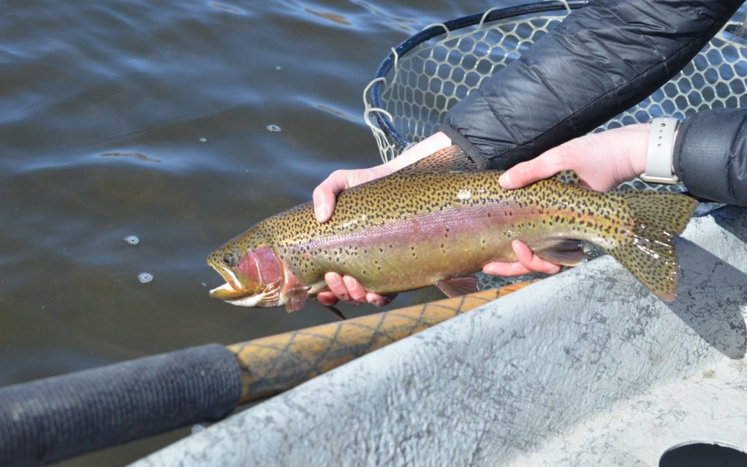 2019 Missouri River Fly Fishing Trips