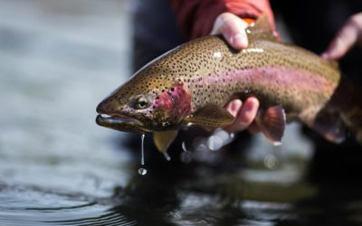 Bozeman, MT Fly Fishing Report 8/22/18