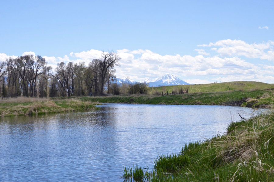 Depuy's Spring Creek in Paradise Valley